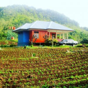 Foto pembibitan cabai di Kabupaten Bantaeng